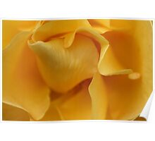 Beautiful Curves - Yellow Rose Poster