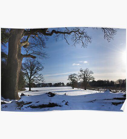 Winter in Bellurgan Park Poster
