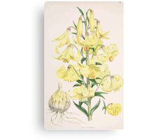 A Monograph of the Genus Lilium Henry John Elwes Illustrations W H Fitch 1880 0101 Canvas Print