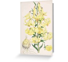 A Monograph of the Genus Lilium Henry John Elwes Illustrations W H Fitch 1880 0101 Greeting Card