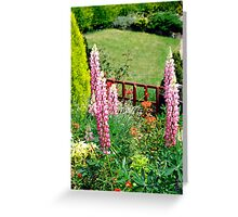 Pink Lupin flowers in a garden Greeting Card