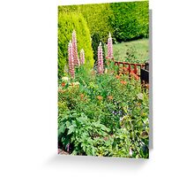 Pink Lupin Flowers Greeting Card