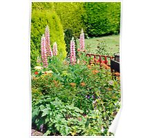 Pink Lupin Flowers Poster