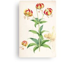 A Monograph of the Genus Lilium Henry John Elwes Illustrations W H Fitch 1880 0135 Canvas Print