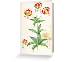 A Monograph of the Genus Lilium Henry John Elwes Illustrations W H Fitch 1880 0135 Greeting Card