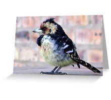 Crested Barbet / Kuifkophoutkapper Greeting Card