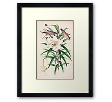 A Monograph of the Genus Lilium Henry John Elwes Illustrations W H Fitch 1880 0097 Framed Print