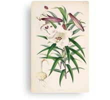 A Monograph of the Genus Lilium Henry John Elwes Illustrations W H Fitch 1880 0097 Canvas Print
