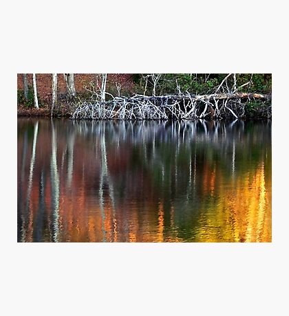 Spirit of a Down'd Oak Tree Photographic Print