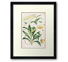 A Monograph of the Genus Lilium Henry John Elwes Illustrations W H Fitch 1880 0131 Framed Print