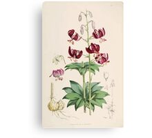 A Monograph of the Genus Lilium Henry John Elwes Illustrations W H Fitch 1880 0111 Canvas Print