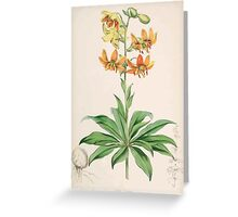 A Monograph of the Genus Lilium Henry John Elwes Illustrations W H Fitch 1880 0035 Greeting Card