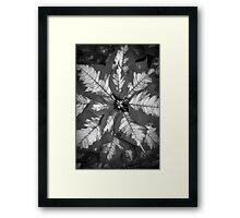 Playful Poinsetta Framed Print
