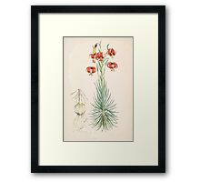 A Monograph of the Genus Lilium Henry John Elwes Illustrations W H Fitch 1880 0039 Framed Print
