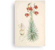 A Monograph of the Genus Lilium Henry John Elwes Illustrations W H Fitch 1880 0039 Canvas Print
