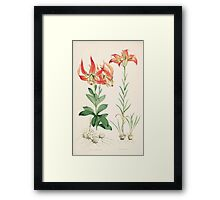 A Monograph of the Genus Lilium Henry John Elwes Illustrations W H Fitch 1880 0139 Framed Print