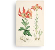 A Monograph of the Genus Lilium Henry John Elwes Illustrations W H Fitch 1880 0139 Canvas Print