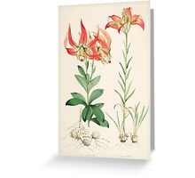 A Monograph of the Genus Lilium Henry John Elwes Illustrations W H Fitch 1880 0139 Greeting Card
