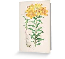 A Monograph of the Genus Lilium Henry John Elwes Illustrations W H Fitch 1880 0077 Greeting Card