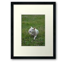 Chillin' Sheep Framed Print