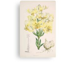 A Monograph of the Genus Lilium Henry John Elwes Illustrations W H Fitch 1880 0051 Canvas Print