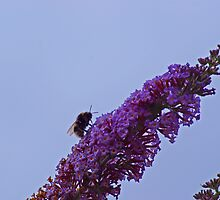 Enterprising Bumblebee by DVate