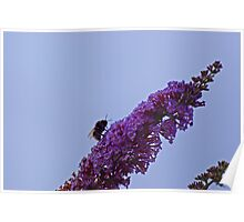 Enterprising Bumblebee Poster