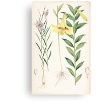 A Monograph of the Genus Lilium Henry John Elwes Illustrations W H Fitch 1880 0203 Canvas Print