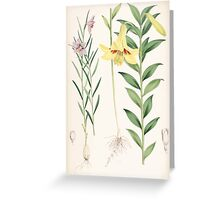 A Monograph of the Genus Lilium Henry John Elwes Illustrations W H Fitch 1880 0203 Greeting Card