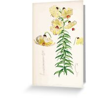 A Monograph of the Genus Lilium Henry John Elwes Illustrations W H Fitch 1880 0103 Greeting Card