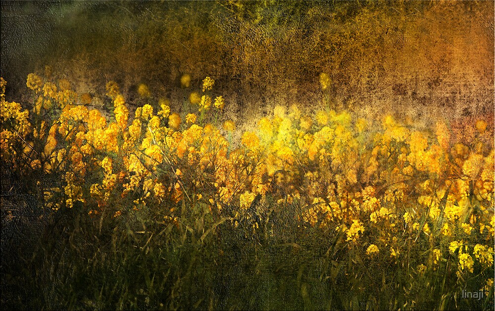 GRASSES by linaji