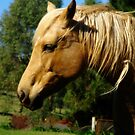 A Country Horse named Dobbin by Marilyn Harris