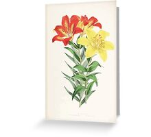 A Monograph of the Genus Lilium Henry John Elwes Illustrations W H Fitch 1880 0175 Greeting Card