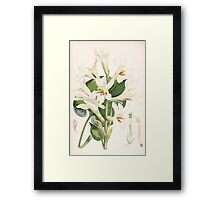 A Monograph of the Genus Lilium Henry John Elwes Illustrations W H Fitch 1880 0181 Framed Print