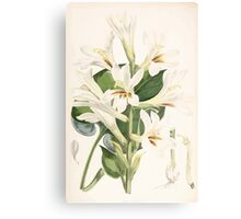 A Monograph of the Genus Lilium Henry John Elwes Illustrations W H Fitch 1880 0181 Canvas Print