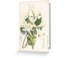 A Monograph of the Genus Lilium Henry John Elwes Illustrations W H Fitch 1880 0181 Greeting Card