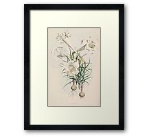A Monograph of the Genus Lilium Henry John Elwes Illustrations W H Fitch 1880 0031 Framed Print