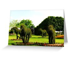 Topiary Horses Greeting Card
