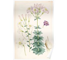 A Monograph of the Genus Lilium Henry John Elwes Illustrations W H Fitch 1880 0187 Poster