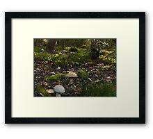 Fungi Forest Framed Print
