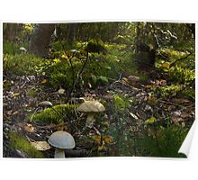 Fungi Forest Poster