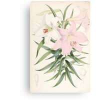 A Monograph of the Genus Lilium Henry John Elwes Illustrations W H Fitch 1880 0107 Canvas Print