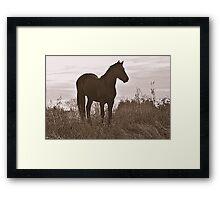 Equine Observer Framed Print