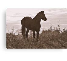 Equine Observer Canvas Print