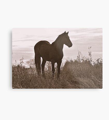 Equine Observer Metal Print