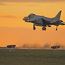 Harrier Sunset by Hertsman
