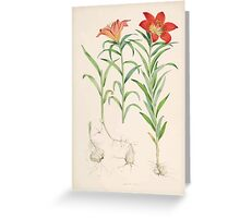A Monograph of the Genus Lilium Henry John Elwes Illustrations W H Fitch 1880 0073 Greeting Card