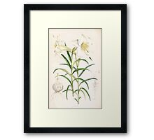 A Monograph of the Genus Lilium Henry John Elwes Illustrations W H Fitch 1880 0191 Framed Print
