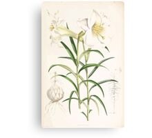 A Monograph of the Genus Lilium Henry John Elwes Illustrations W H Fitch 1880 0191 Canvas Print