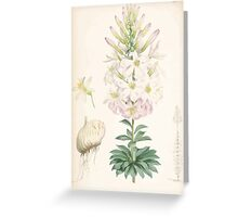 A Monograph of the Genus Lilium Henry John Elwes Illustrations W H Fitch 1880 0185 Greeting Card